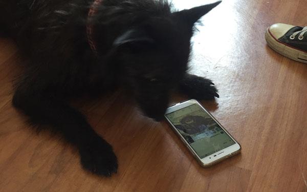 Pets no Instagram